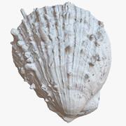 Sea Shell 21 Raw Scan 1M 3d model