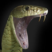 Serpent tigre 3d model