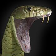 Tiger snake 3d model