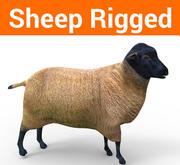 sheep rigged model 3d model