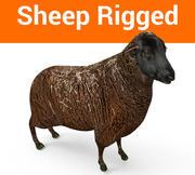 zwart schaap opgetuigd 3d model