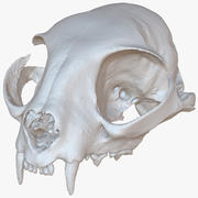 Cat Skull 1M Raw Scan 3d model