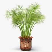Cyperus Papyrus Plant In Pot (1) 3d model