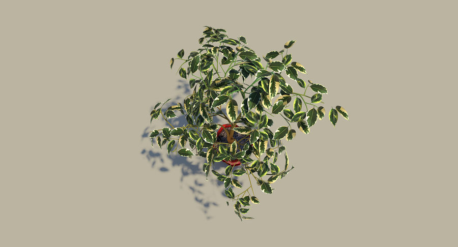 Plant - Ficus royalty-free 3d model - Preview no. 10