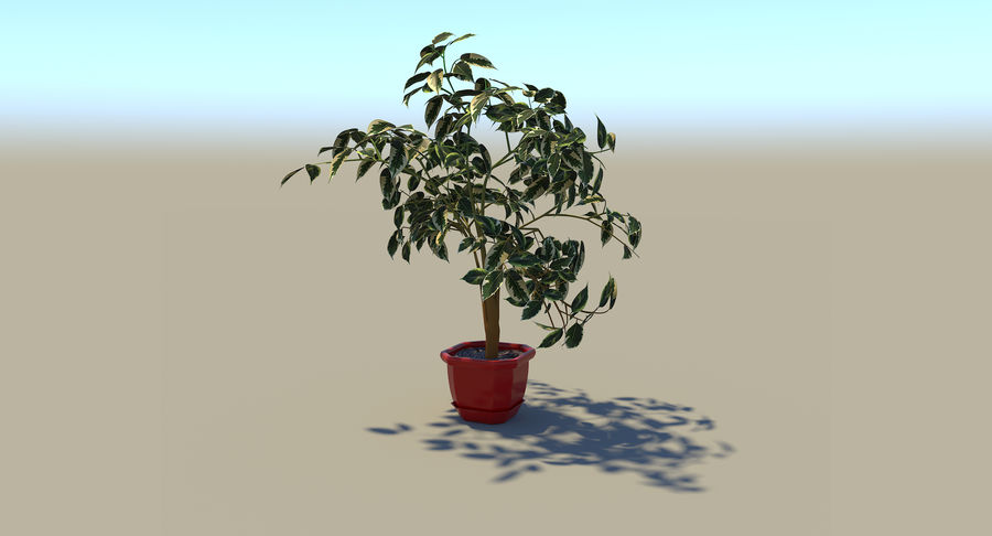 Plant - Ficus royalty-free 3d model - Preview no. 8