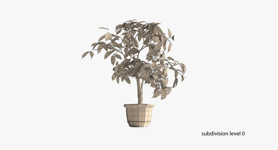 Plant - Ficus royalty-free 3d model - Preview no. 14