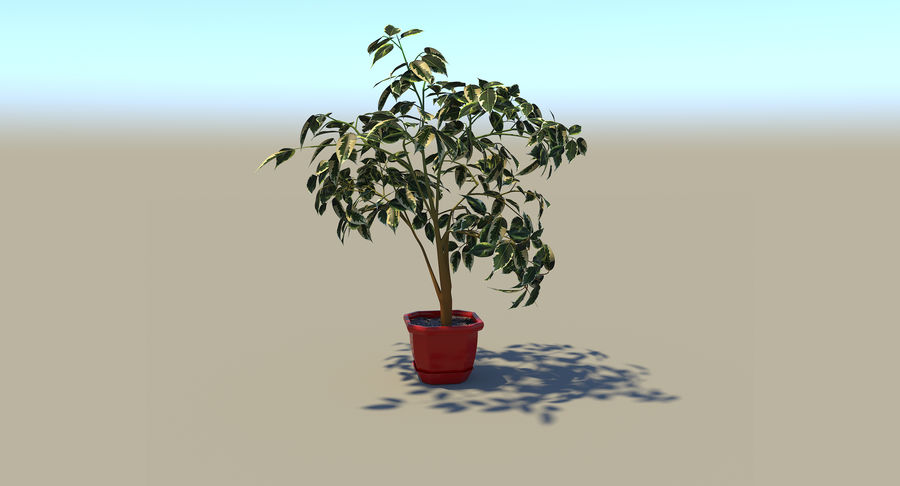 Plant - Ficus royalty-free 3d model - Preview no. 9