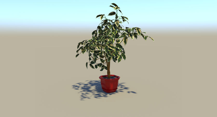 Plant - Ficus royalty-free 3d model - Preview no. 5