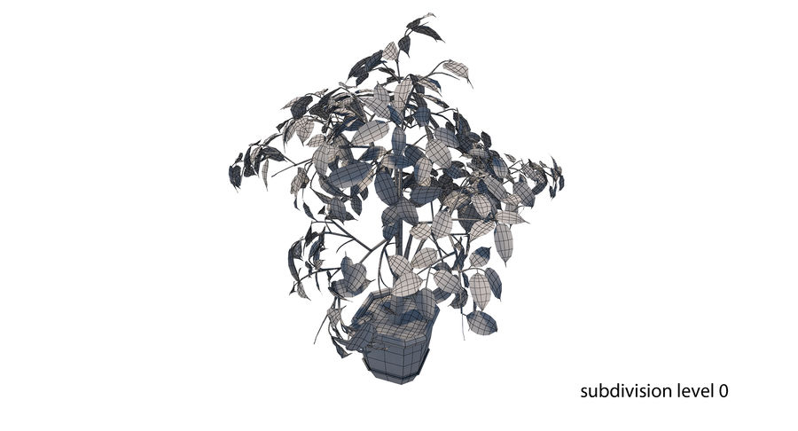 Plant - Ficus royalty-free 3d model - Preview no. 16