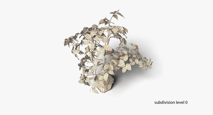 Plant - Ficus royalty-free 3d model - Preview no. 15