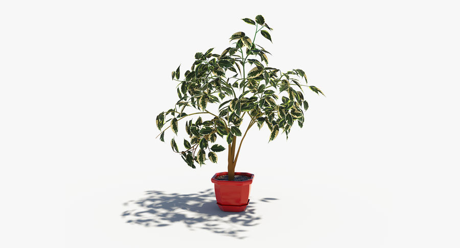 Plant - Ficus royalty-free 3d model - Preview no. 2