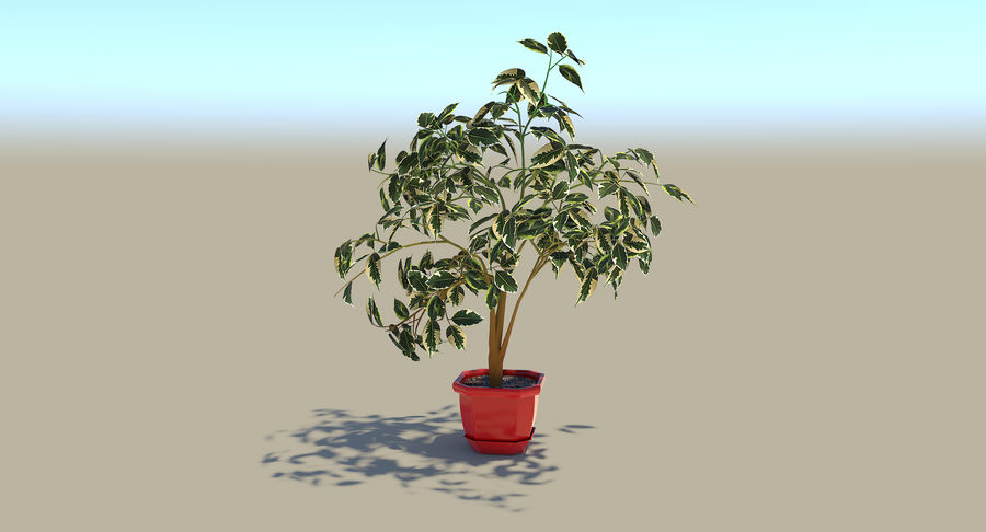 Plant - Ficus royalty-free 3d model - Preview no. 3