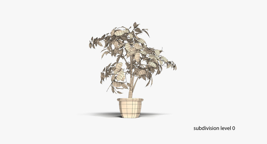 Plant - Ficus royalty-free 3d model - Preview no. 12