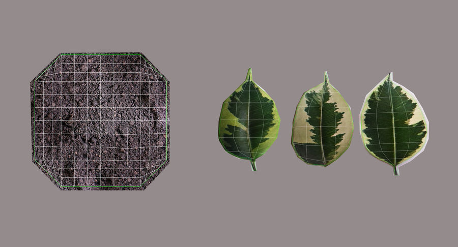 Plant - Ficus royalty-free 3d model - Preview no. 17