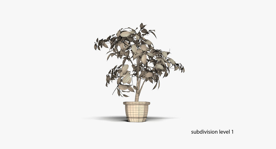 Plant - Ficus royalty-free 3d model - Preview no. 11