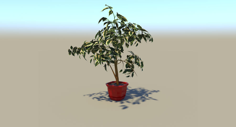 Plant - Ficus royalty-free 3d model - Preview no. 6