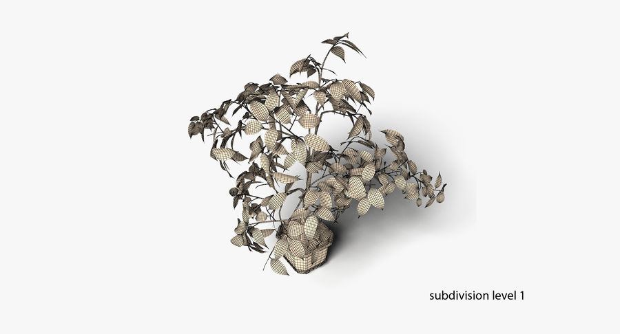 Plant - Ficus royalty-free 3d model - Preview no. 13