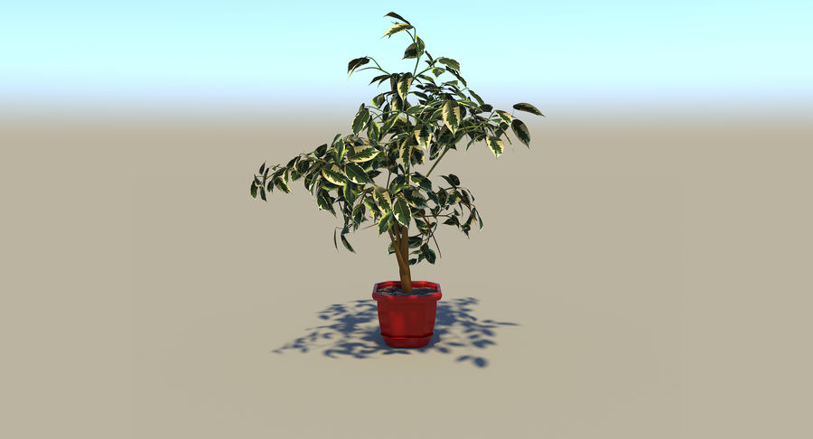 Plant - Ficus royalty-free 3d model - Preview no. 7