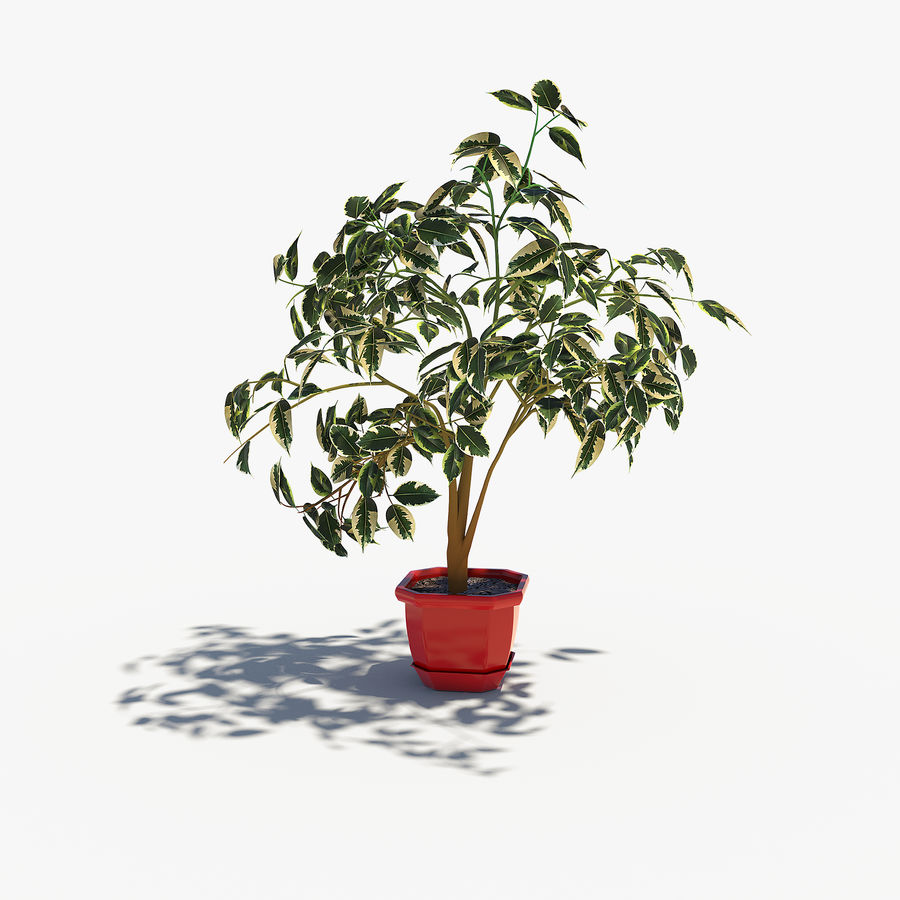 Plant - Ficus royalty-free 3d model - Preview no. 1