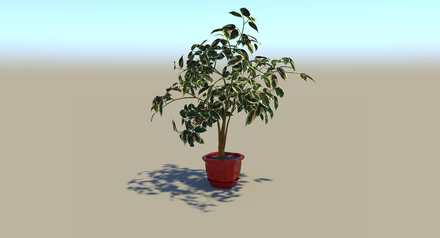Plant - Ficus royalty-free 3d model - Preview no. 4