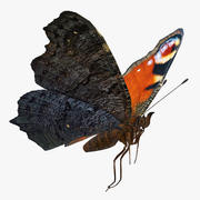 Model 3D European Peacock Butterfly Flying Pose 3d model
