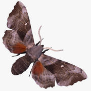 Sphinx Moth with FUR 3d model
