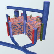Realistisk leverlobule-anatomi 3d model