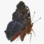 Peacock Butterfly lub Aglais io Flying Pose with Fur 3D Model 3d model