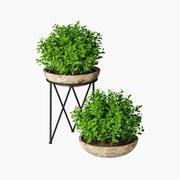 Kleine Pflanze 04 3d model