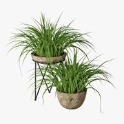 Kleine Pflanze 05 3d model