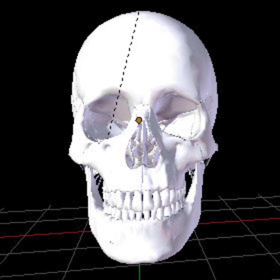 Menselijke schedel royalty-free 3d model - Preview no. 4