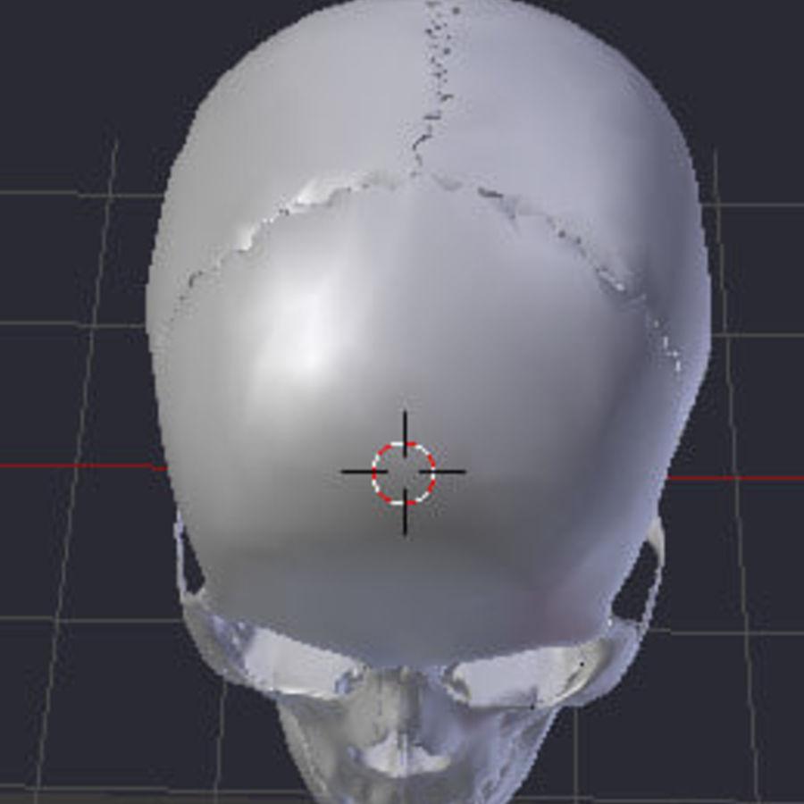 Menselijke schedel royalty-free 3d model - Preview no. 3