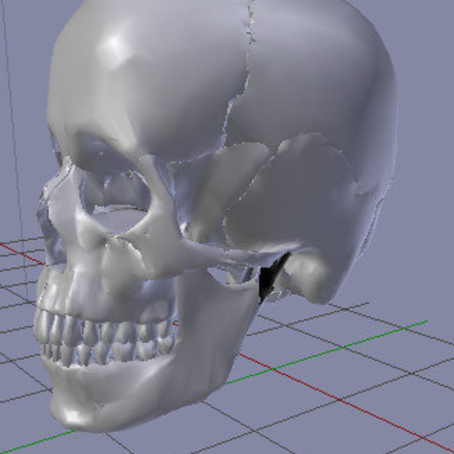 Menselijke schedel royalty-free 3d model - Preview no. 2