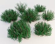 Krzewy 3d model