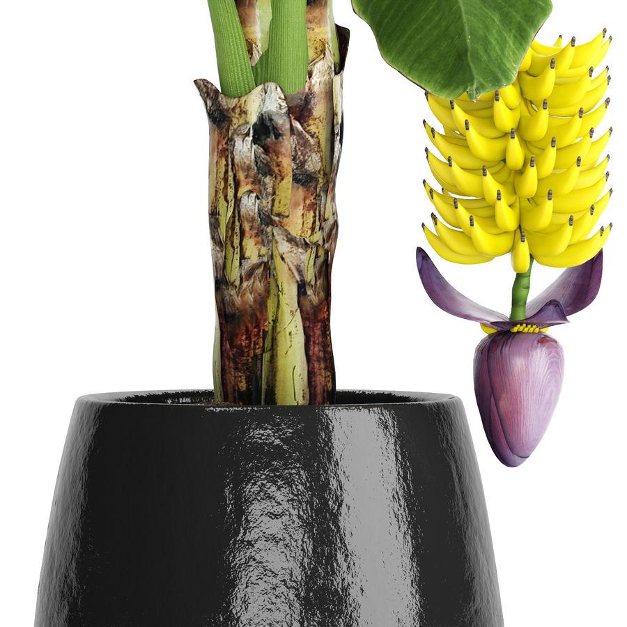 Palma de plátano con fruta de plátano royalty-free modelo 3d - Preview no. 5