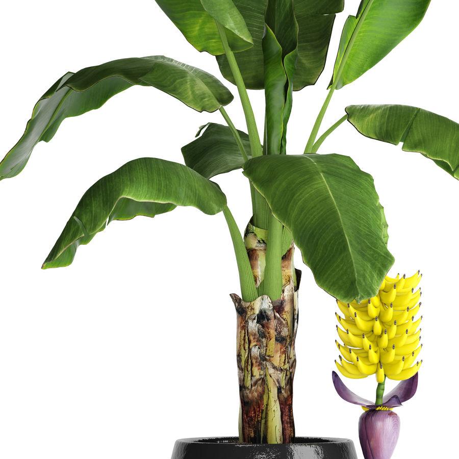 Palma de plátano con fruta de plátano royalty-free modelo 3d - Preview no. 3