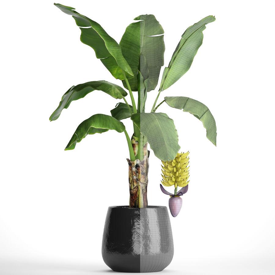 Palma de plátano con fruta de plátano royalty-free modelo 3d - Preview no. 7
