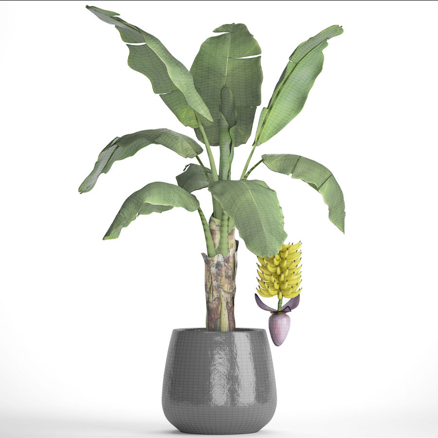 Palma de plátano con fruta de plátano royalty-free modelo 3d - Preview no. 10