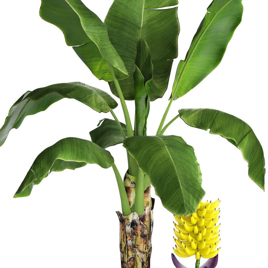 Palma de plátano con fruta de plátano royalty-free modelo 3d - Preview no. 4