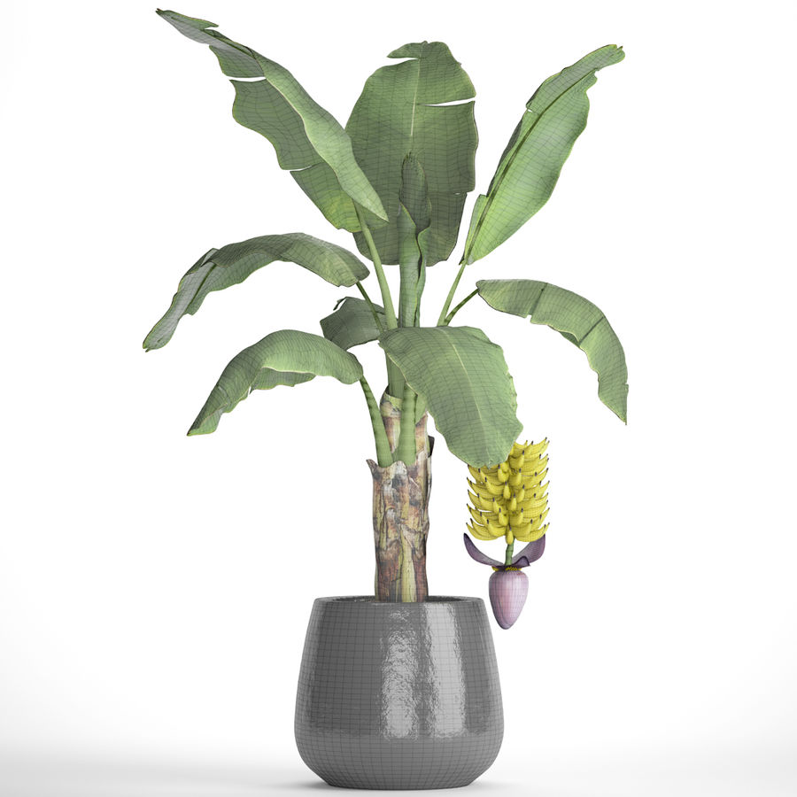 Palma de plátano con fruta de plátano royalty-free modelo 3d - Preview no. 8