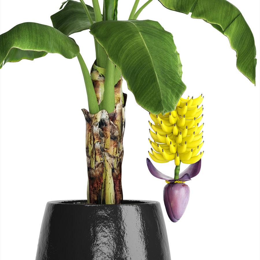 Palma de plátano con fruta de plátano royalty-free modelo 3d - Preview no. 11