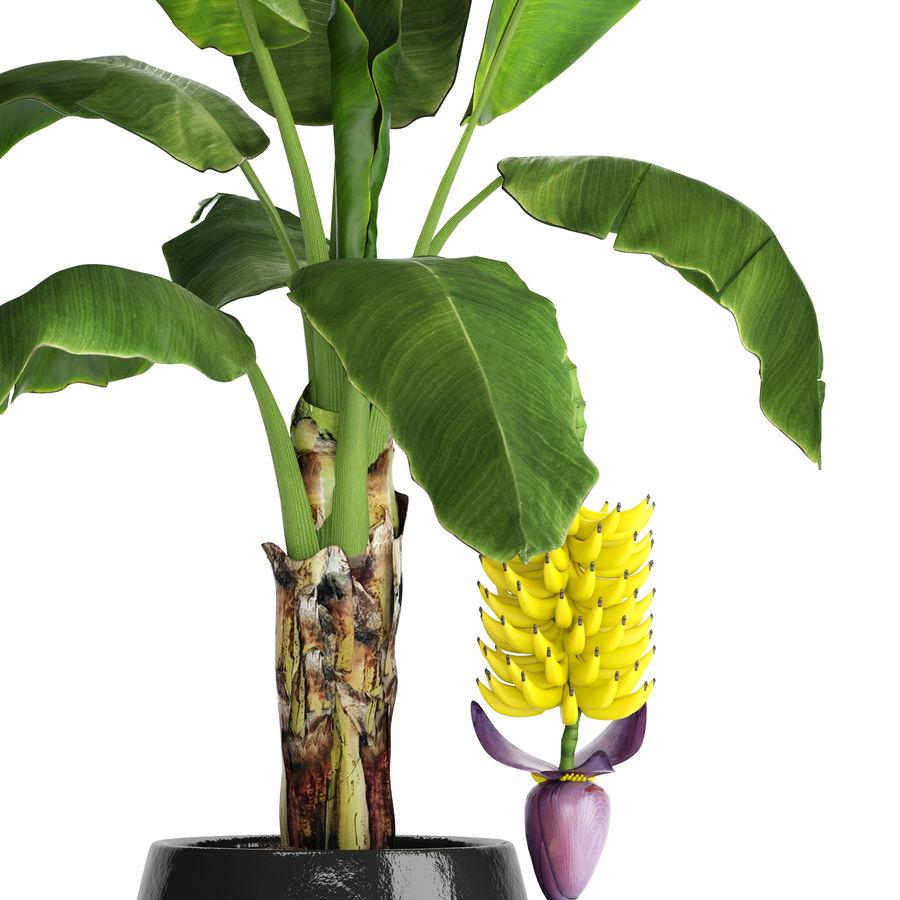Palma de plátano con fruta de plátano royalty-free modelo 3d - Preview no. 6