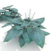 Hosta Mavi Melek 3d model
