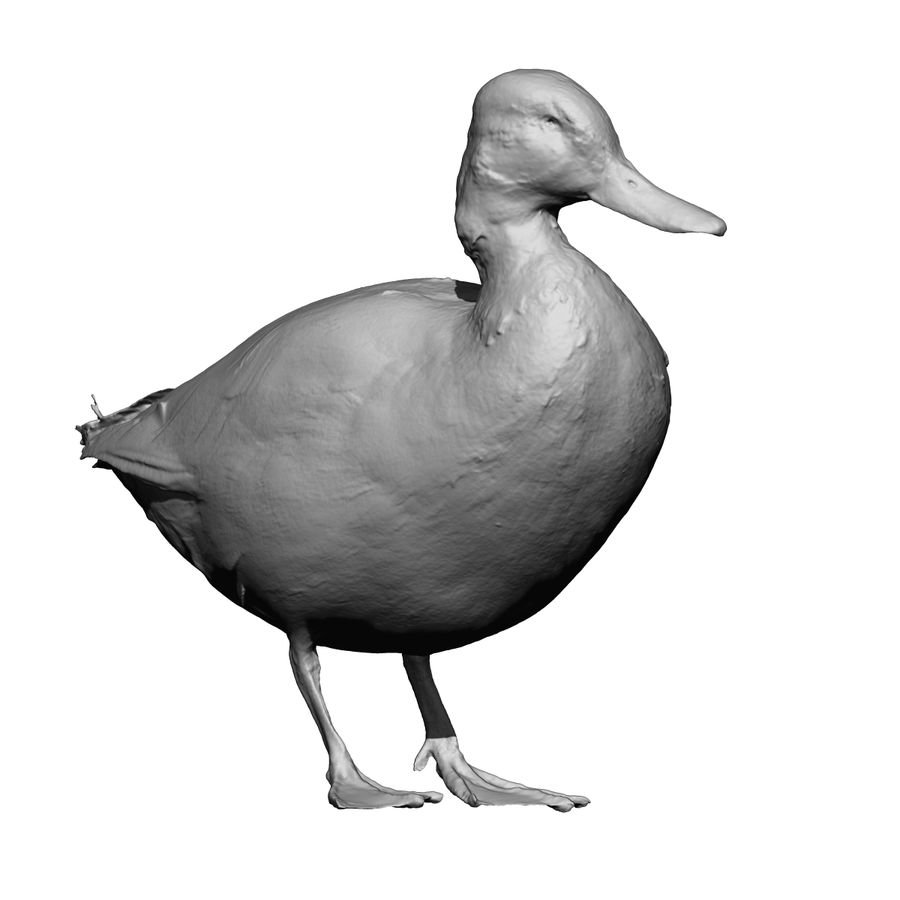 Canard debout (taxidermie) royalty-free 3d model - Preview no. 6