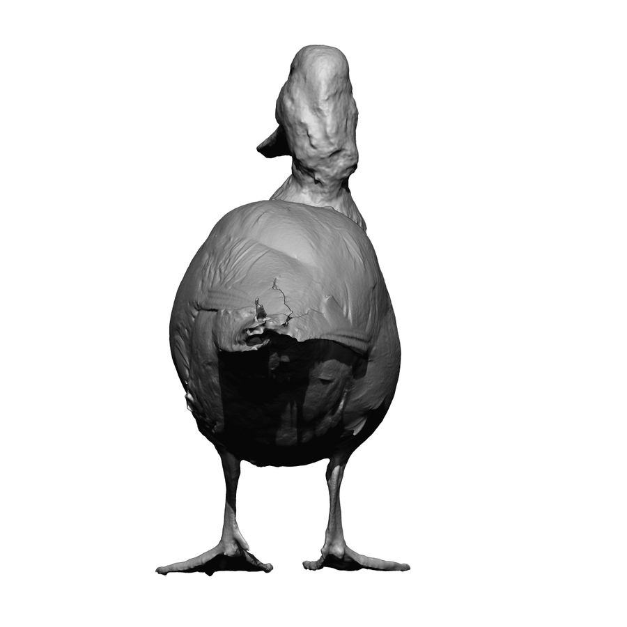 Canard debout (taxidermie) royalty-free 3d model - Preview no. 7