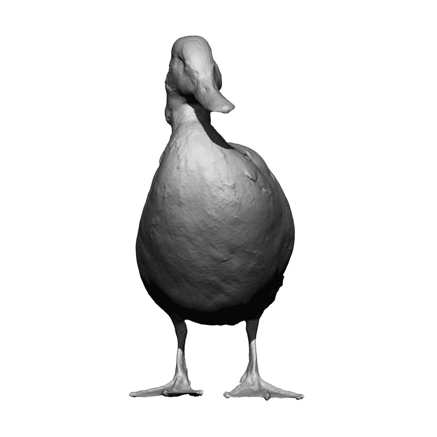 Canard debout (taxidermie) royalty-free 3d model - Preview no. 3