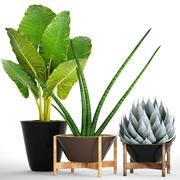 收集热带植物 3d model
