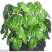 收集植物龟背竹 3d model