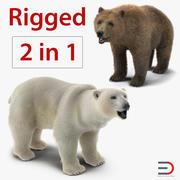 Kolekcja uzbrojona niedźwiedzie brunatne i polarne 3d model