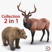 3D-Modellsammlung für Bären und Elche 3d model